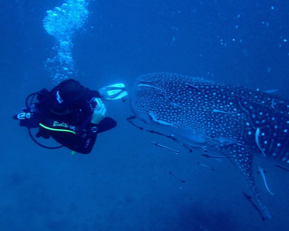 Paul Kei Matsuda engaging in underwater photography, shooting a whale shark. / Courtesy photo